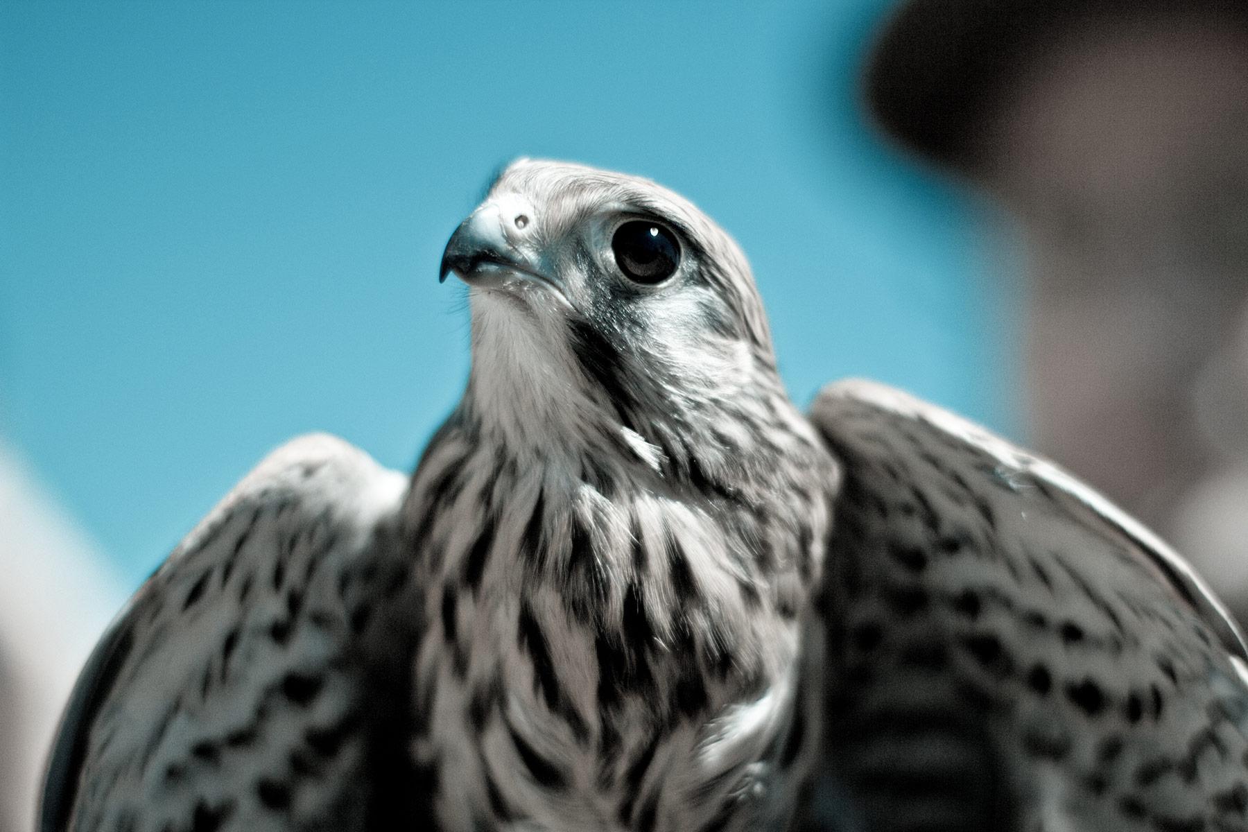Observez les oiseaux depuis votre chambre